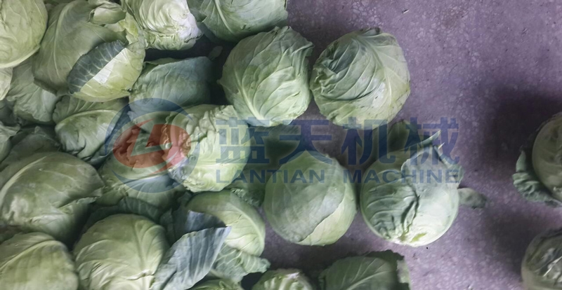 Our cabbage washer machine price is just,and cabbage washing machine is used bubble washing machine