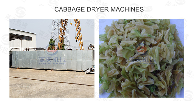 Cabbage dryer machines