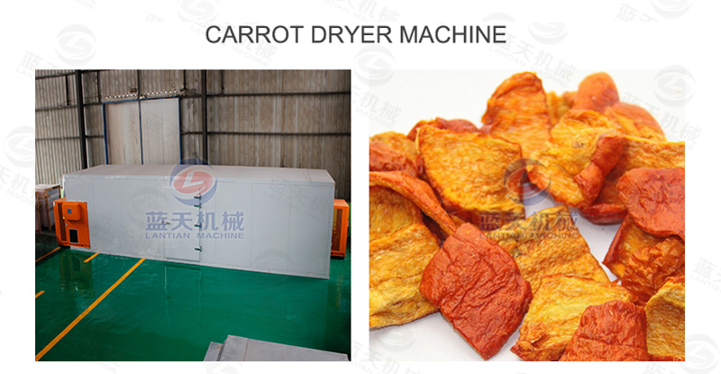 Carrot dryer machine